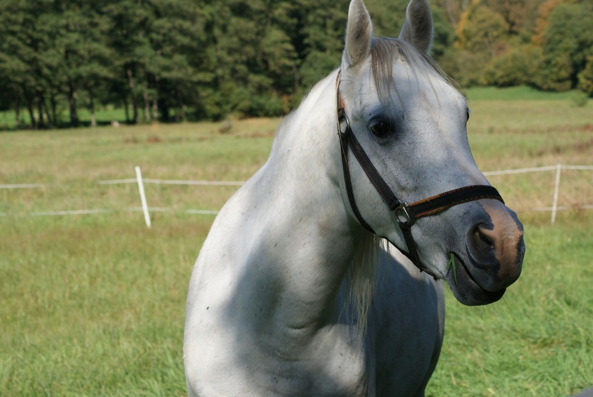 Horses use their sense of taste to tell the difference between toxic plants and edible plants