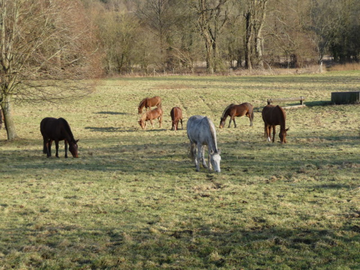 Grazing is good for horses