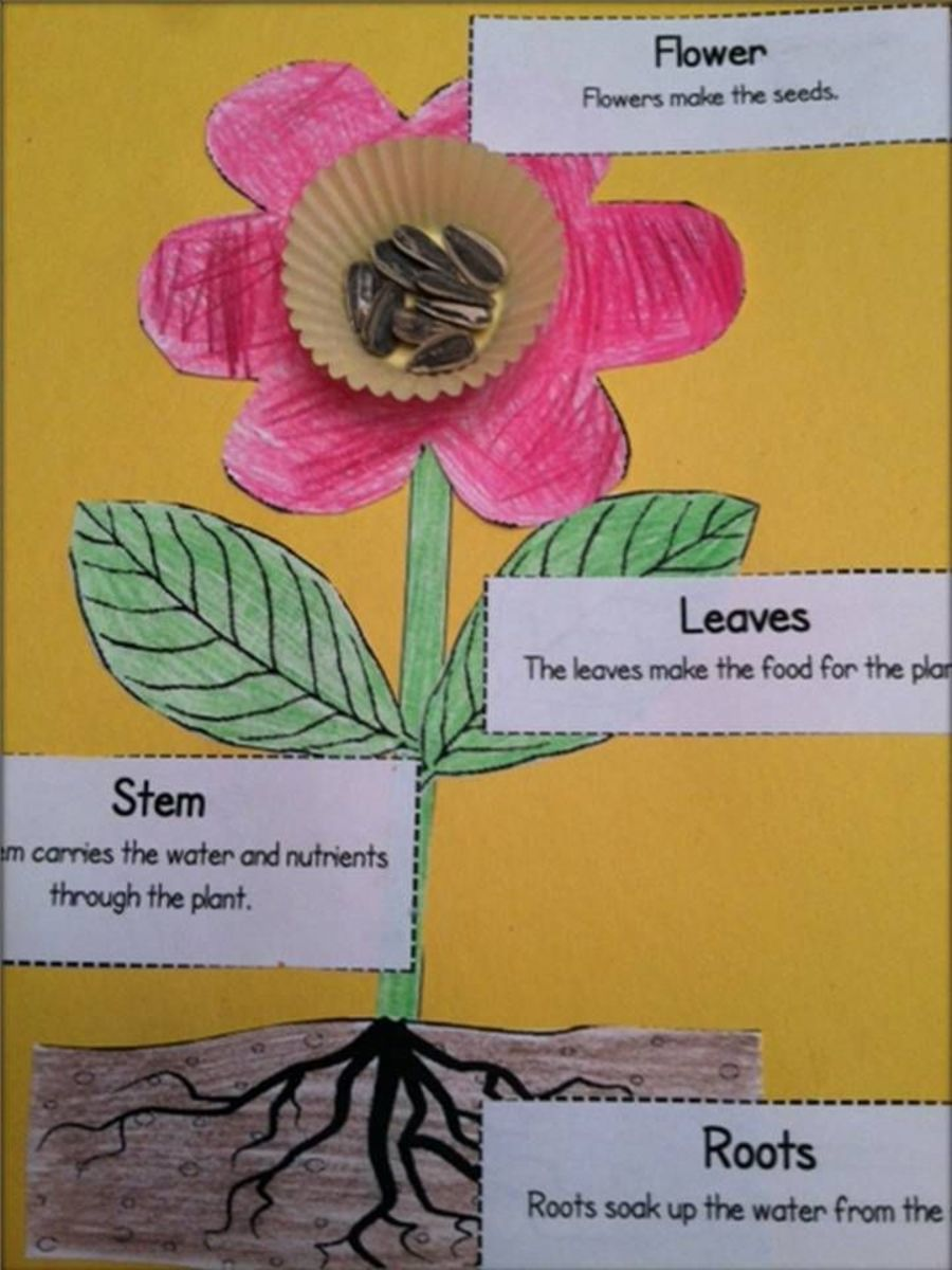 This shows the basic parts of a plant.