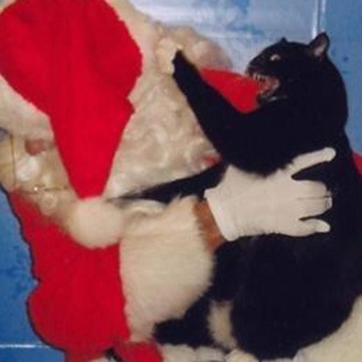 Cat attacks Santa Claus!