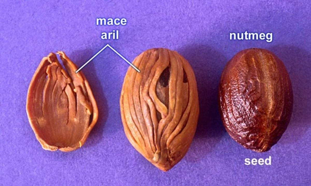 Nutmeg, Mace and Ginger; Health Benefits and Side Effects ...