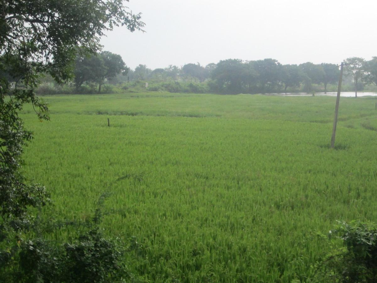It is greenery everywhere
