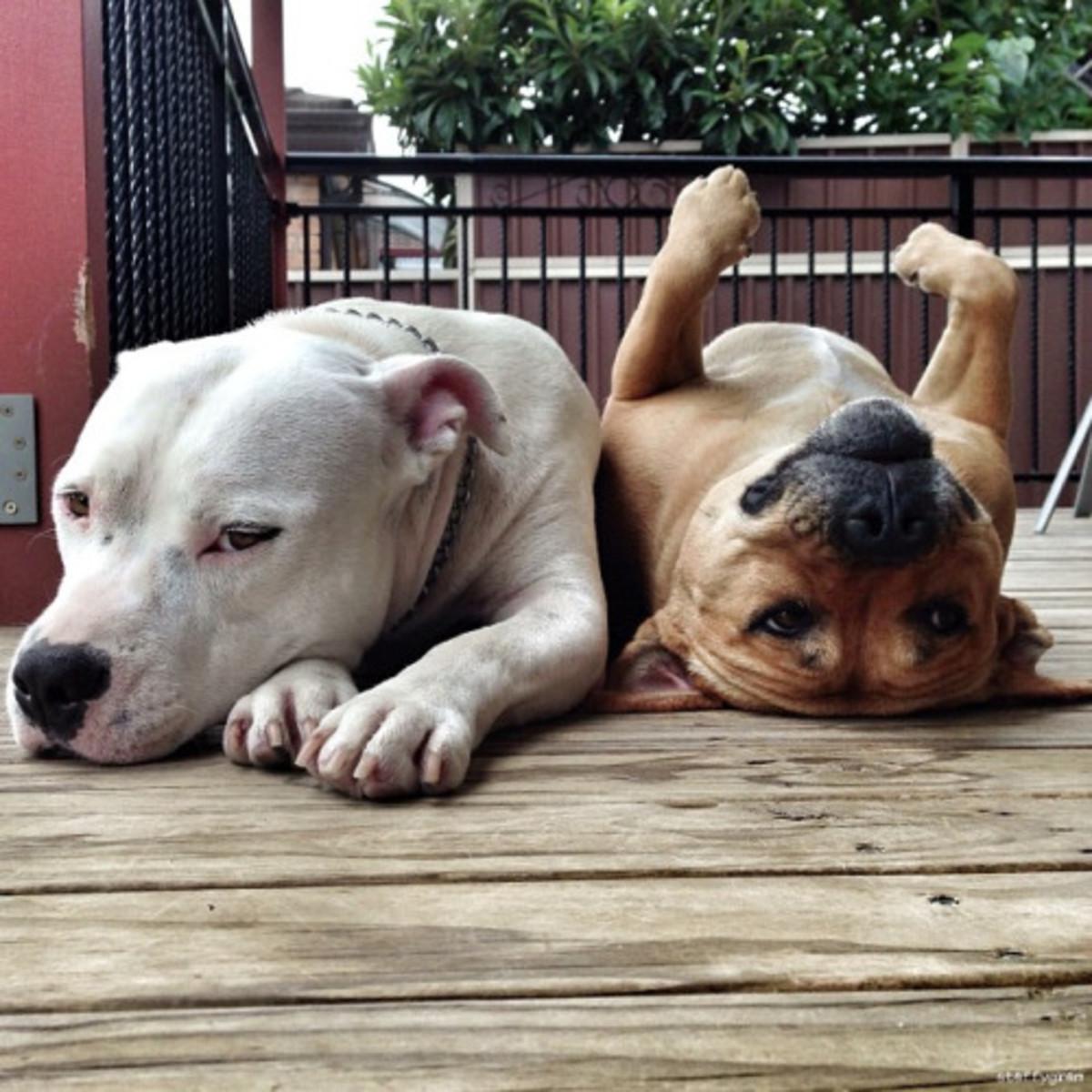 Best Dog Food For Bowel Incontinence