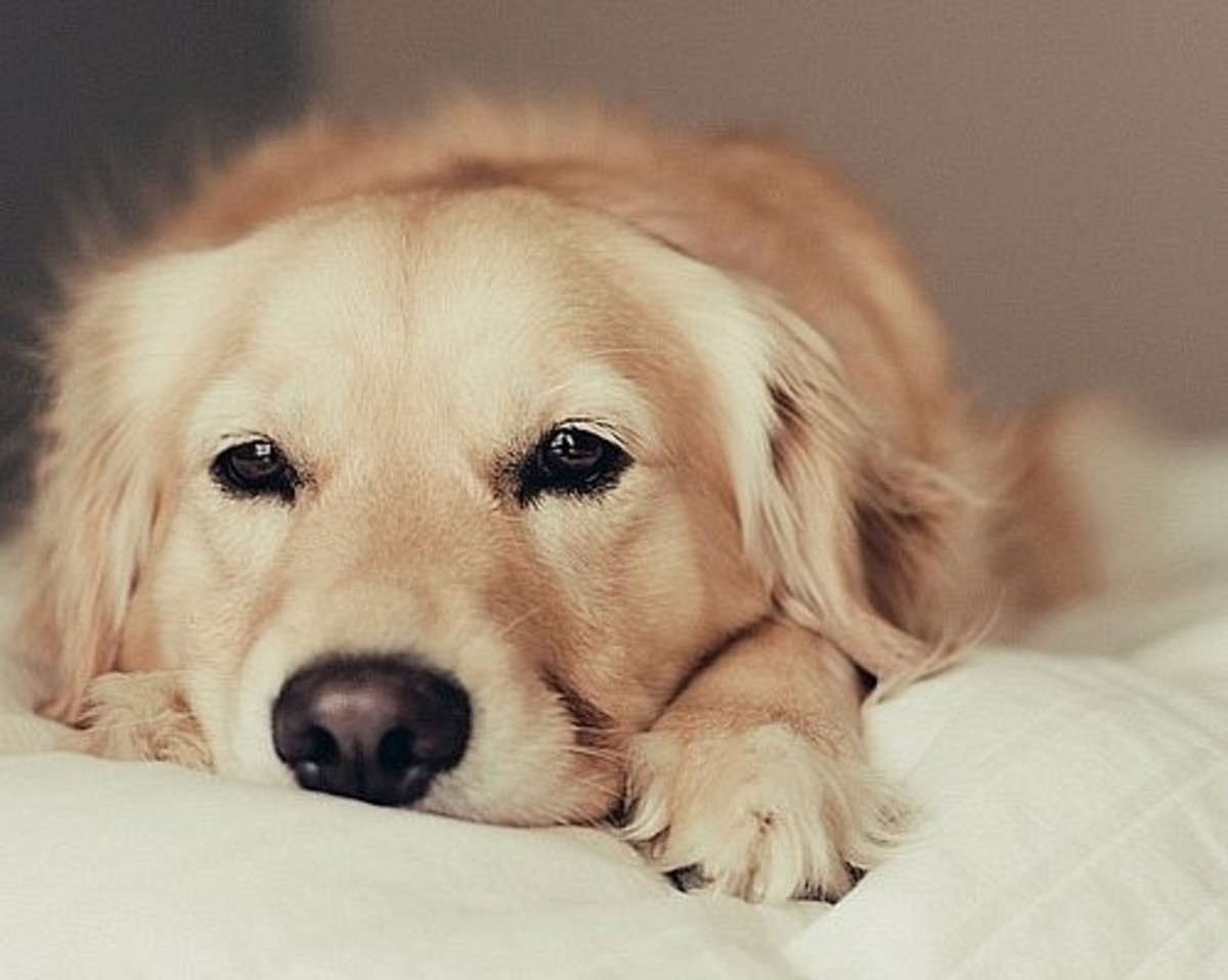is-your-dogs-food-secretly-making-them-sick