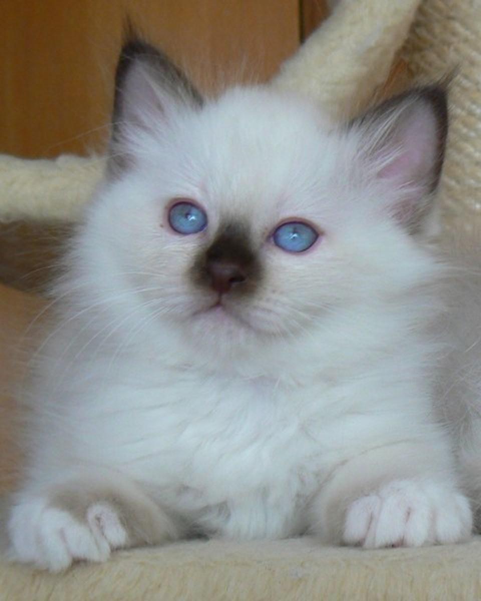 Who's a pretty kitty?