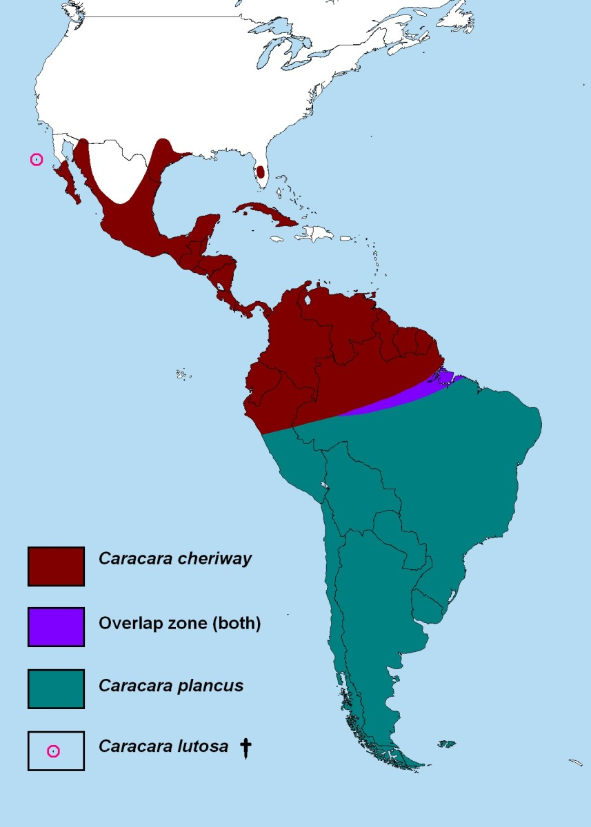 From Wikipedia, Combined ranges of all Caracaras