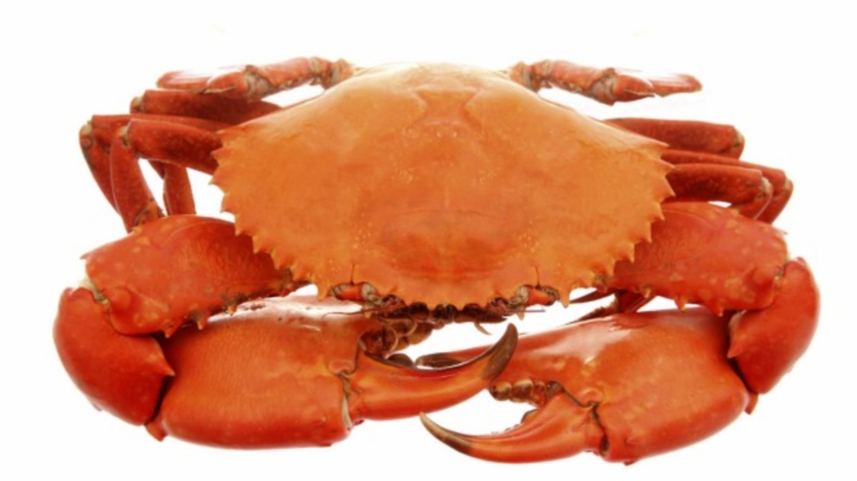 Nipped: A crab is back in custody after a sparking fears of a break-in at West End.