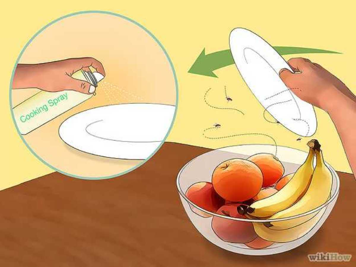 how-to-kill-fruit-flies-protect-your-fruitbowl