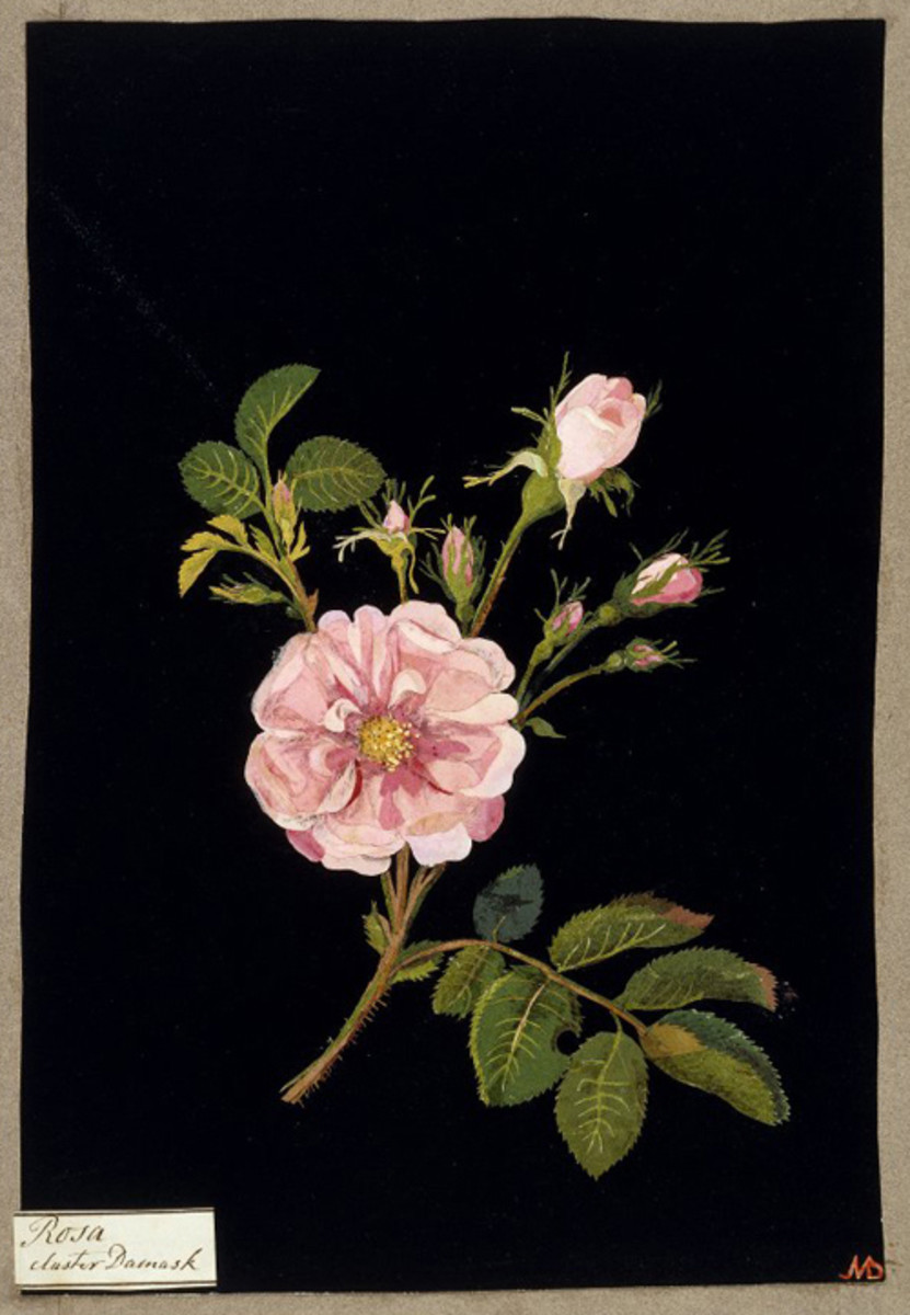 Artists Who Started Late in Life: Mary Delany