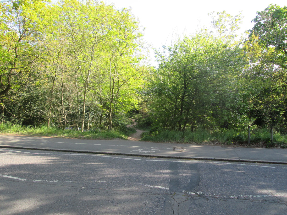 Or here's another way in opposite a short road interestingly named 'The Forest', more interestingly leads to Forest School, a fee-paying establishment that parents hope will fast-track their little darlings to a financially rewarding career