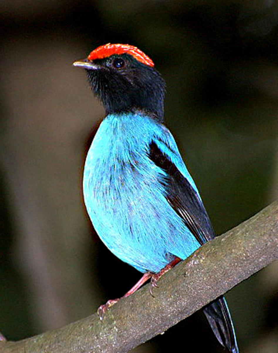 10 Amazing Bird Courtship Dances and Displays