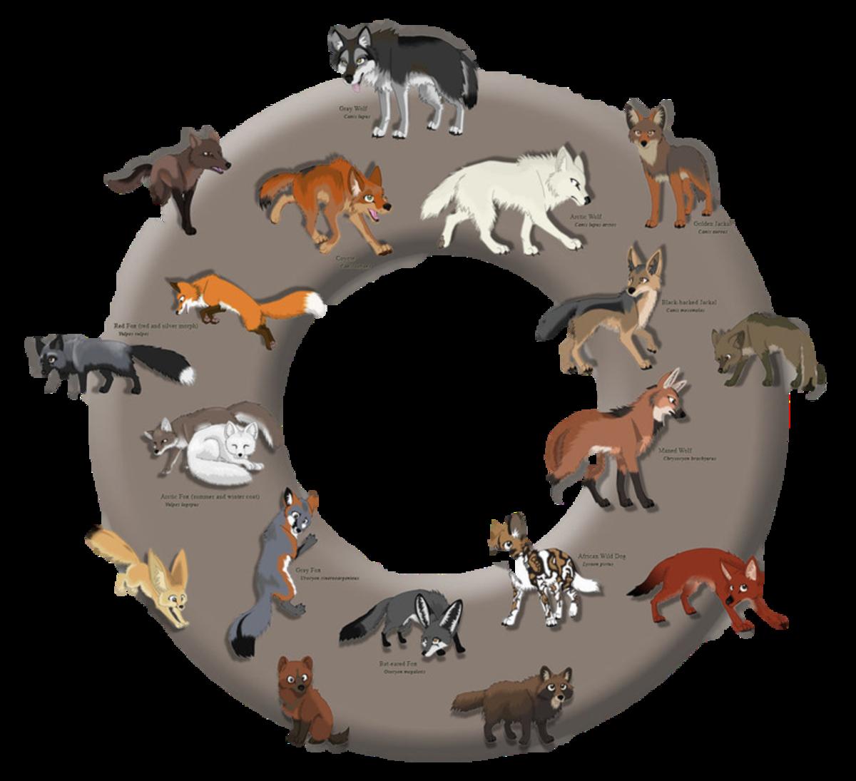 Canidae Family Members