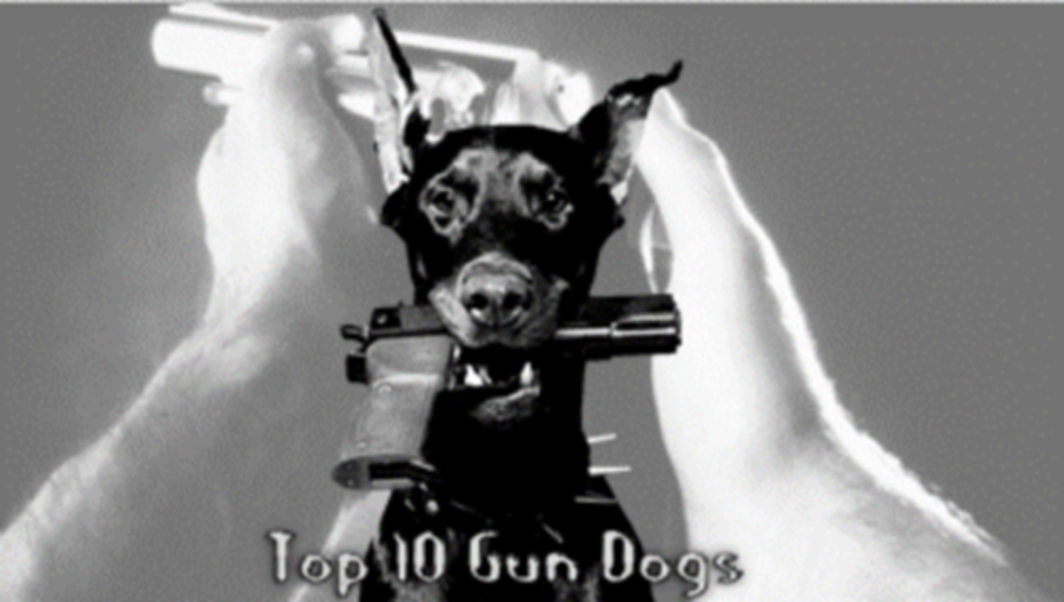 The 10 Best Hunting Gun Dogs