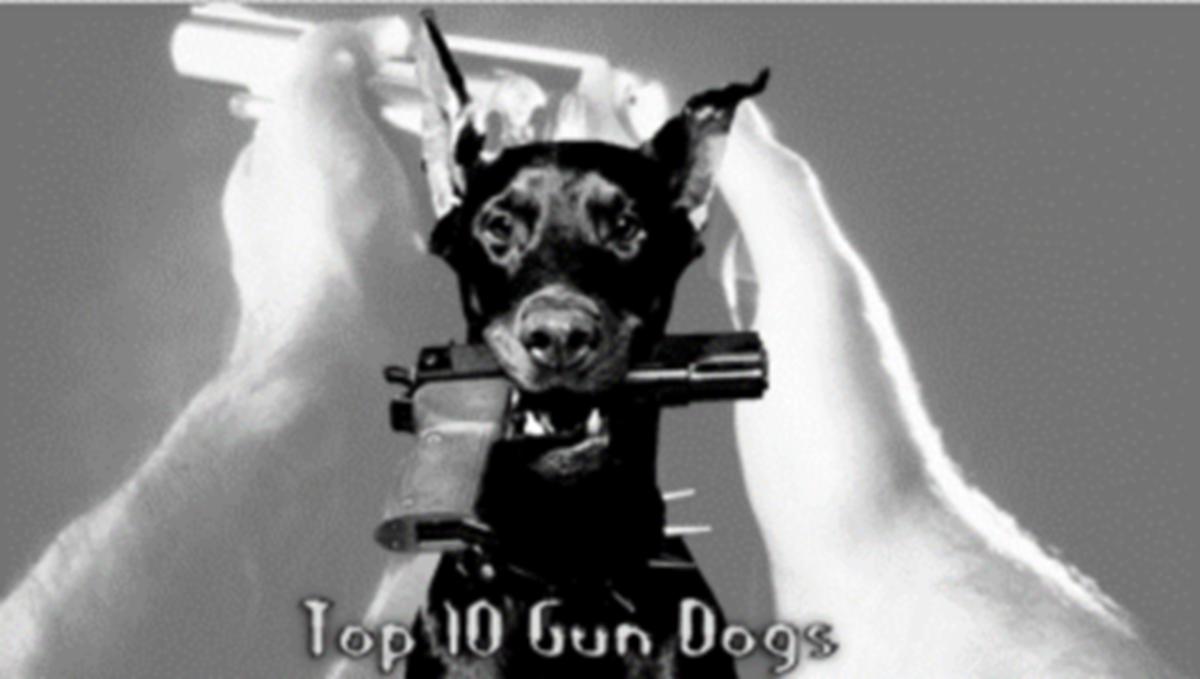 top-10-hunting-gun-dogs