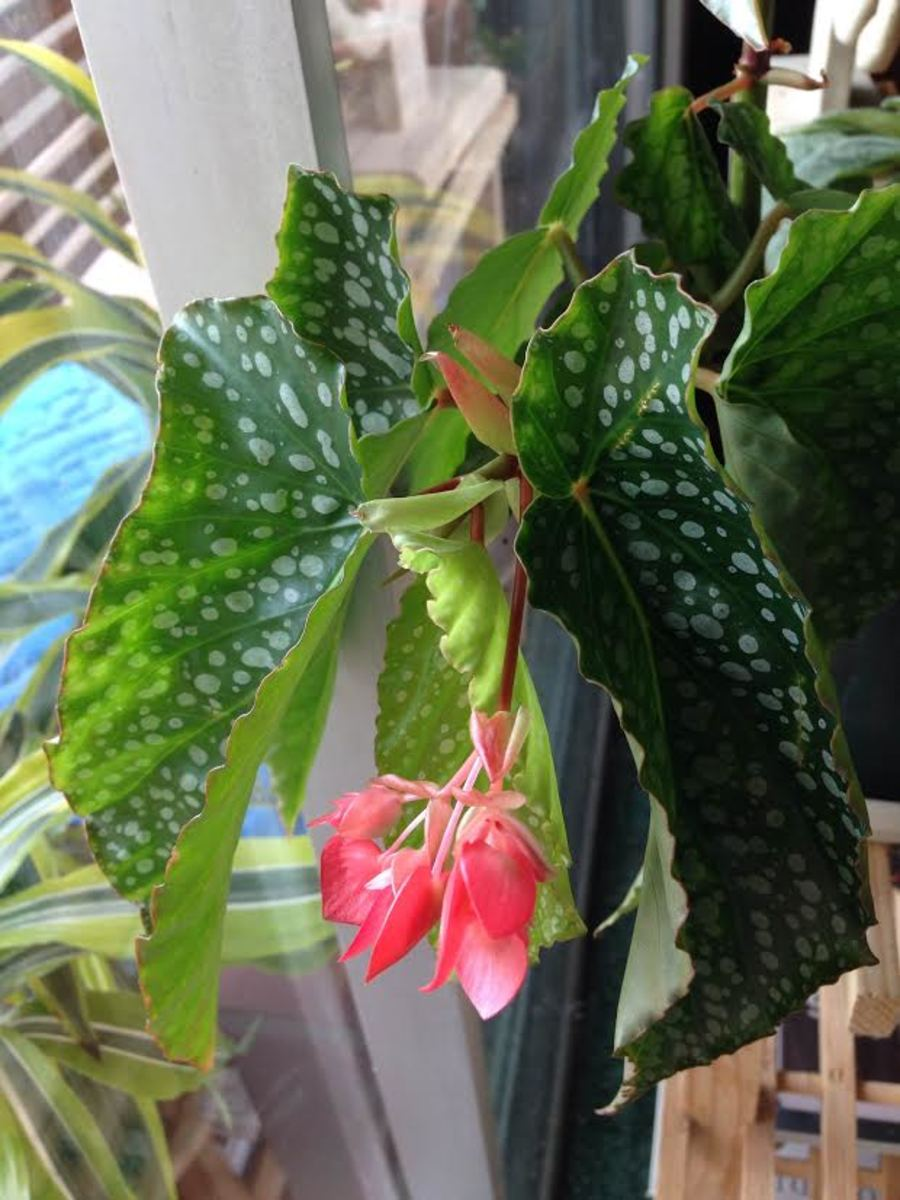 five-amazing-and-easy-house-plants