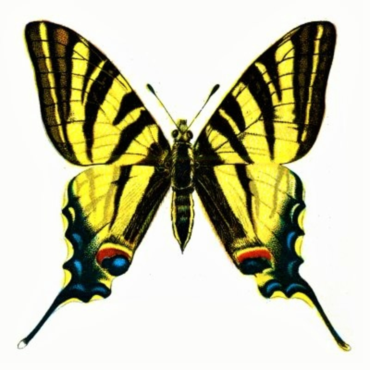the-butterfly-effect-my-theory-in-regards-to-love