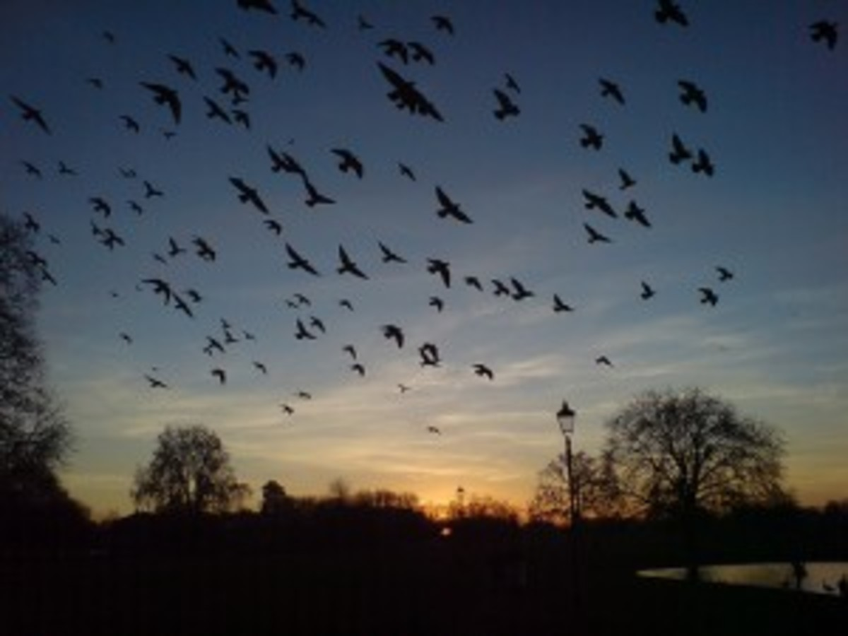 The Sluagh at sunset