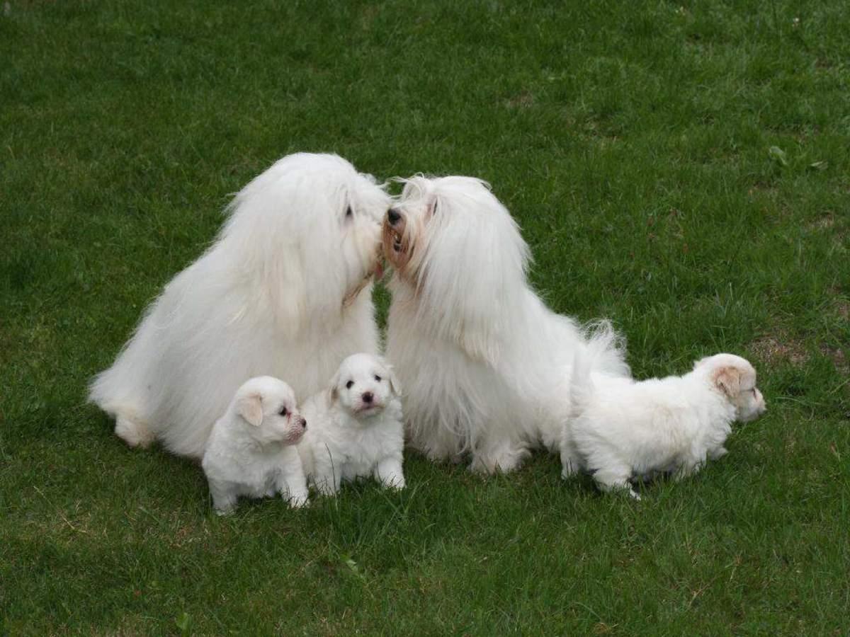 New Dog Breeds