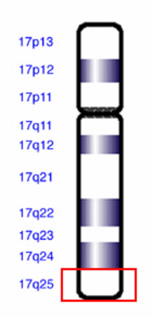 The chromosomal locus of the acid aloha glucosidase gene.