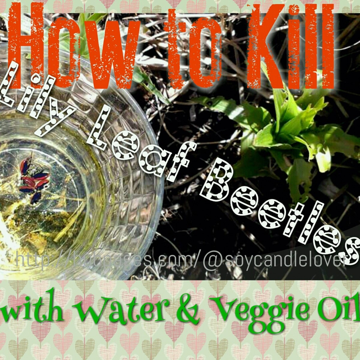 How to Kill Red Lily Leaf Beetles the Eco-friendly Organic Way