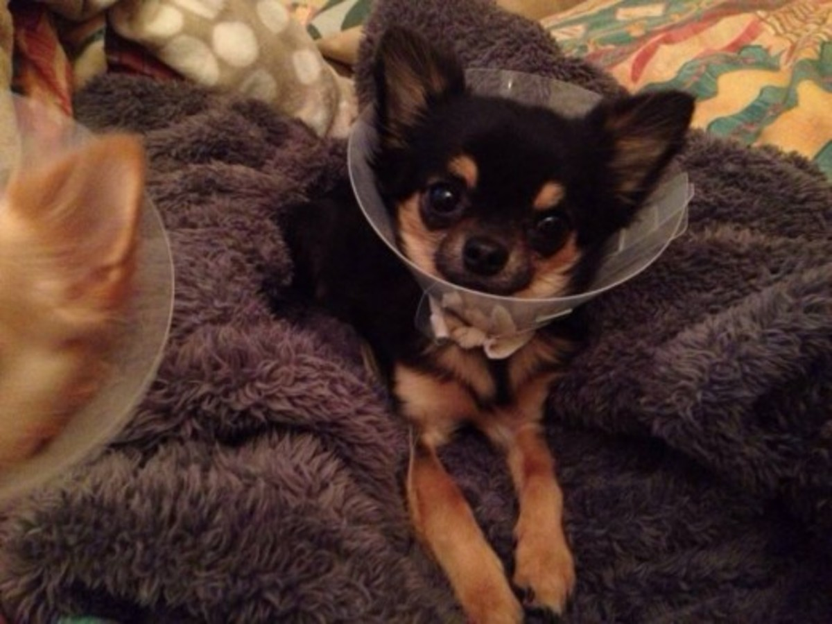 My Dog was Neutered