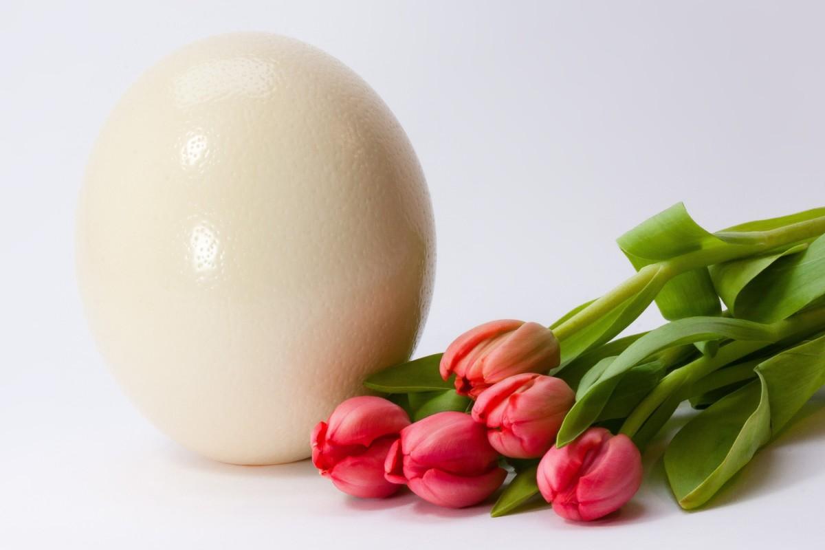 An Ostrich's Egg