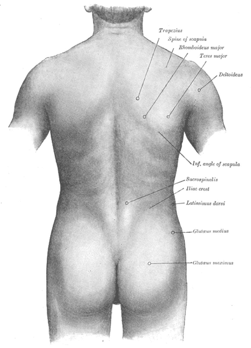 Rhomboid muscle strain or spasm