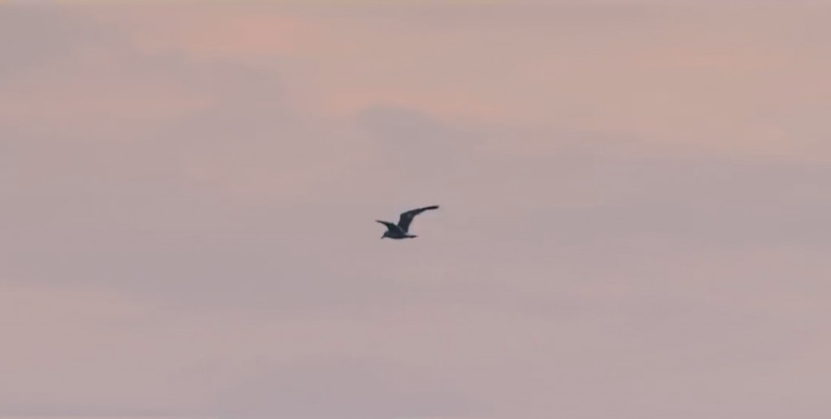 A single bird which flies through the sky at 2:34.