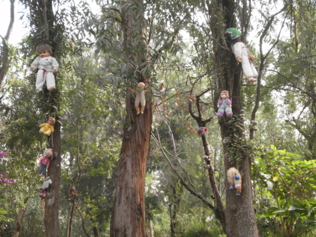 Trees with dolls on Island of the Dolls