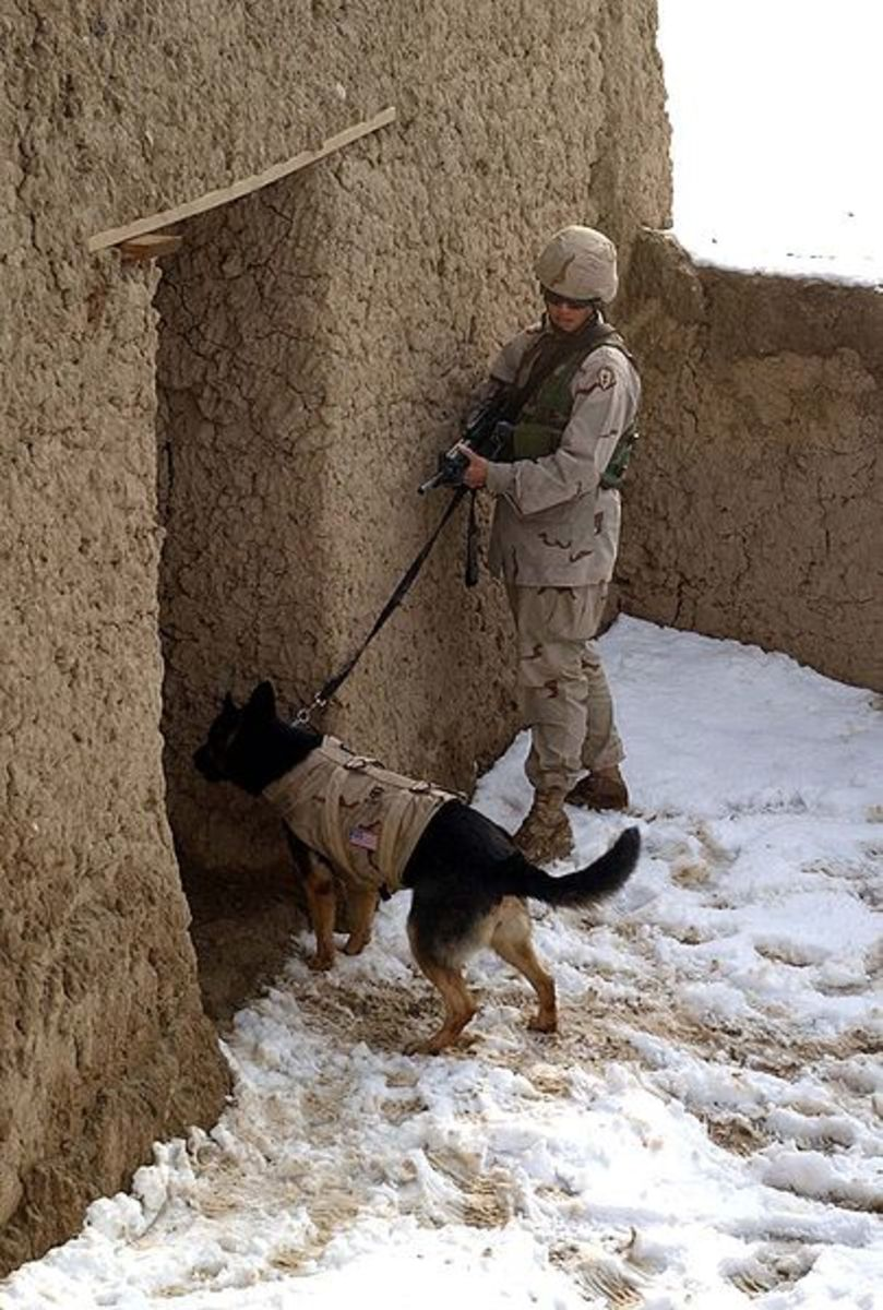 Anti-poaching organizations are developing a light-weight bullet-proof-vest to protect their hounds, including a gel that helps regulate dog's body temperature.