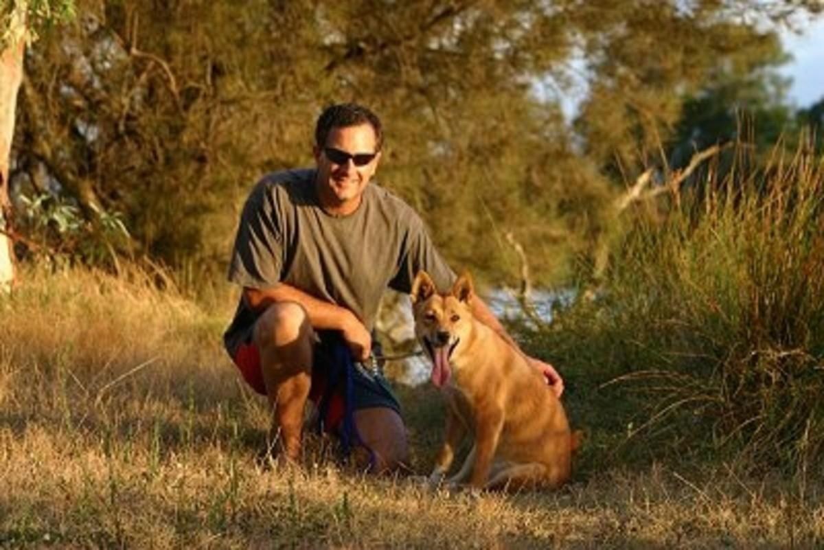 The Australian Dingo Dog as Pet