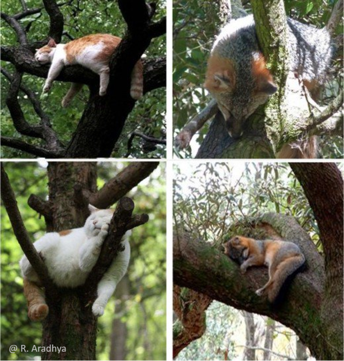 The foxes sleeping on tree like cats
