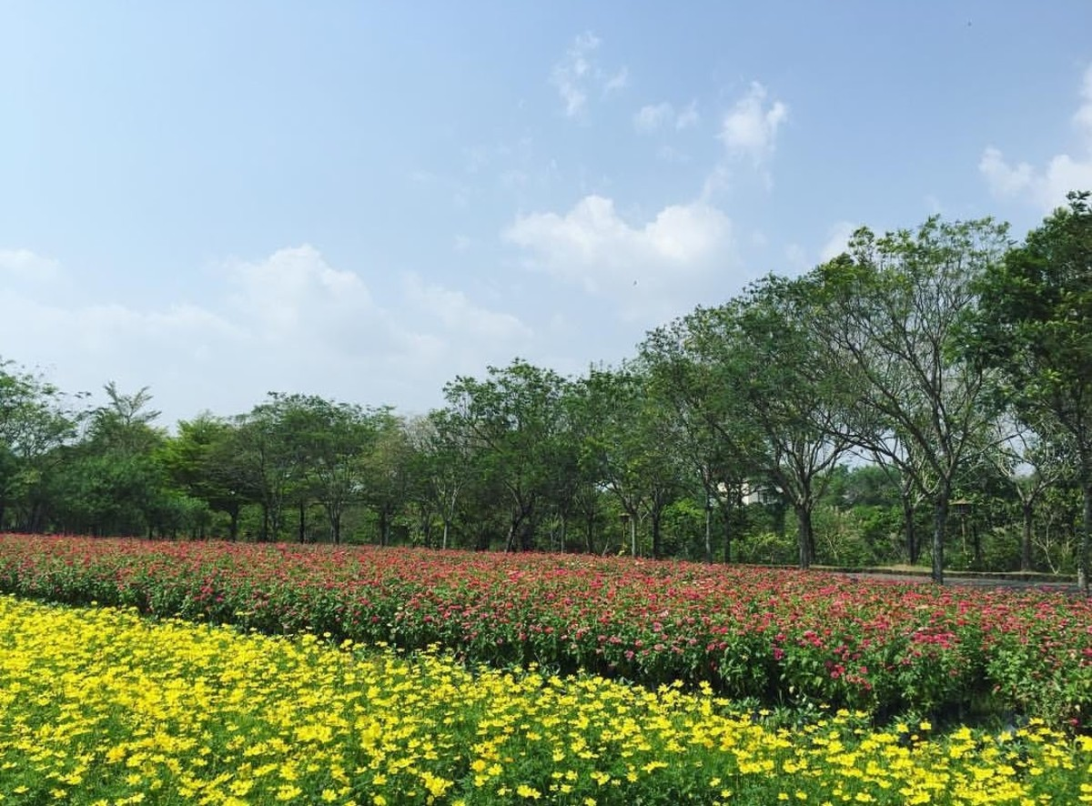 During Lunar Tet Holidays, flowers bloom in tremendous charm and glory, which is beautiful for photography