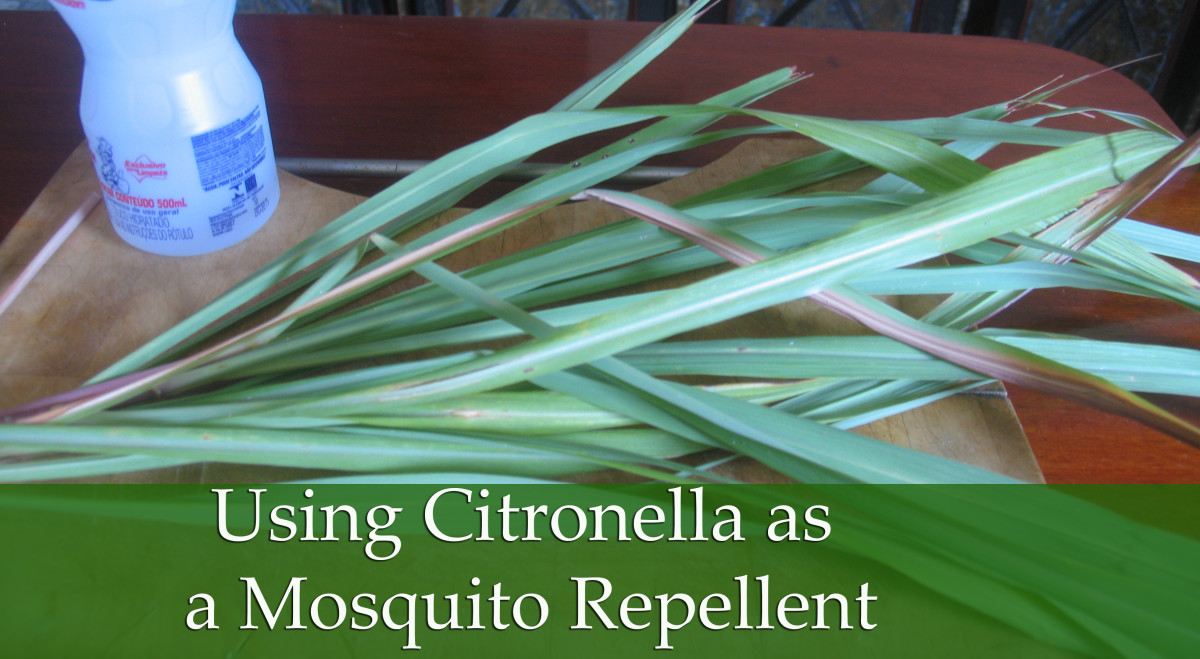 Using Citronella for Insect repellent