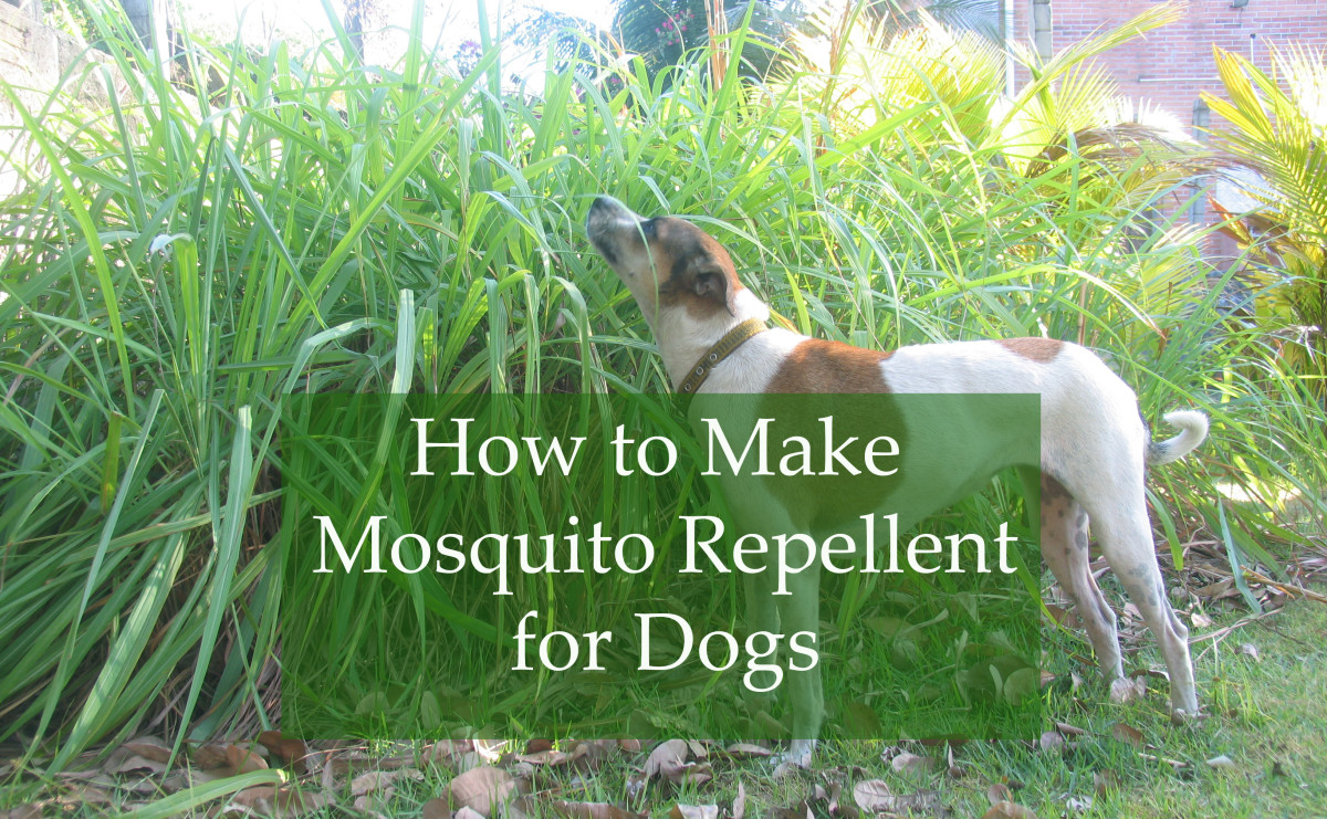 Homemade Mosquito Repellent for Dogs