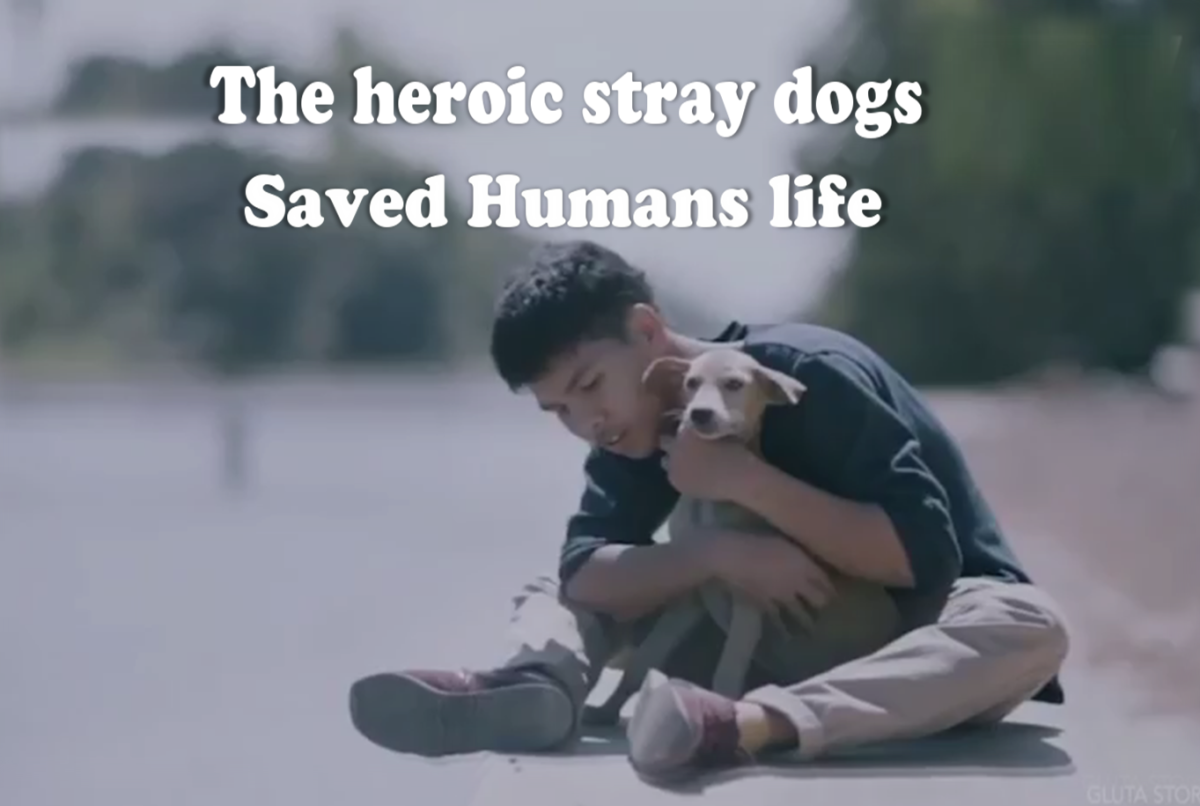 10 Heroic Stray Dogs That Saved Humans Life