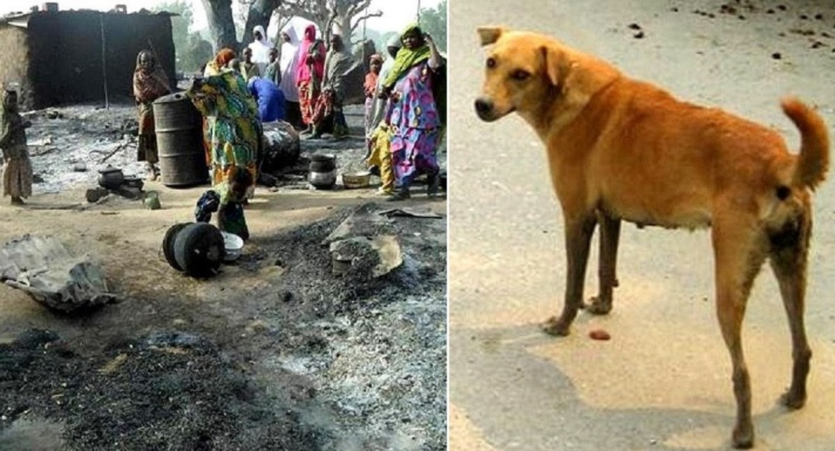 Dog that saved the couple of life from a Suicide Bomber in Nigeria