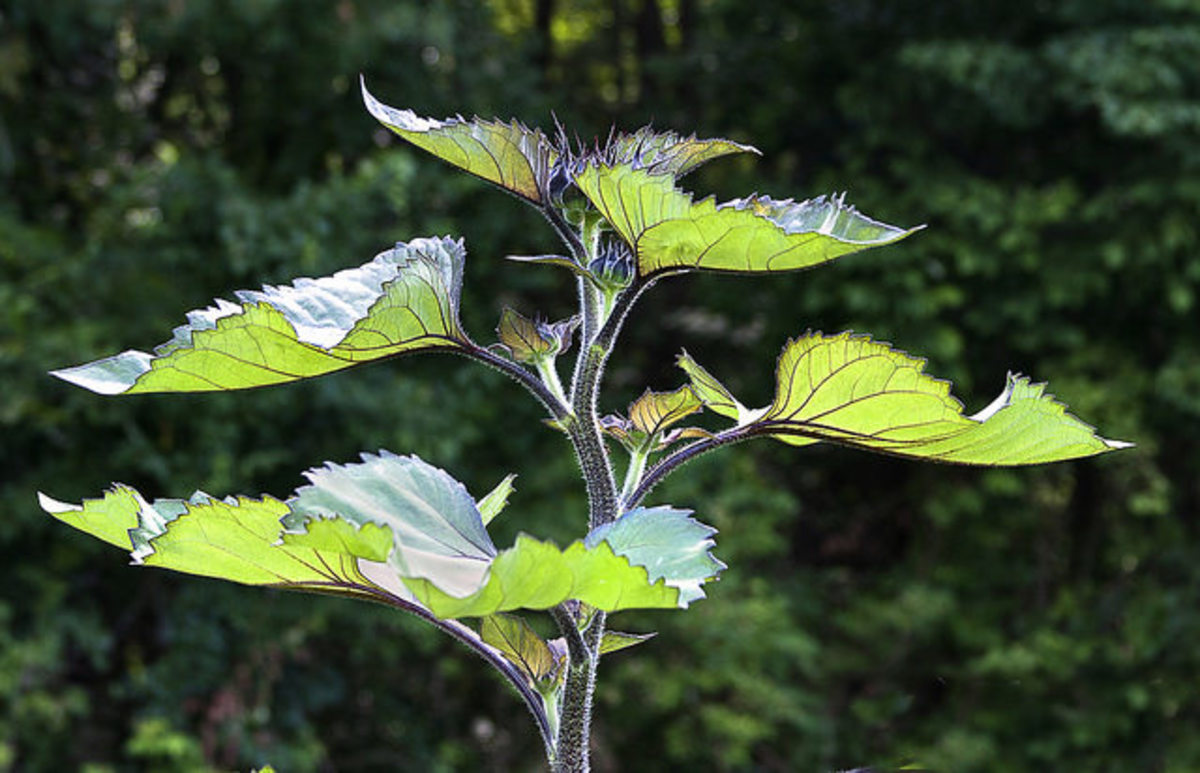 """A newly developed, solar powered """"leaf"""" mimics photosynthesis, converting CO2 into fuel"""