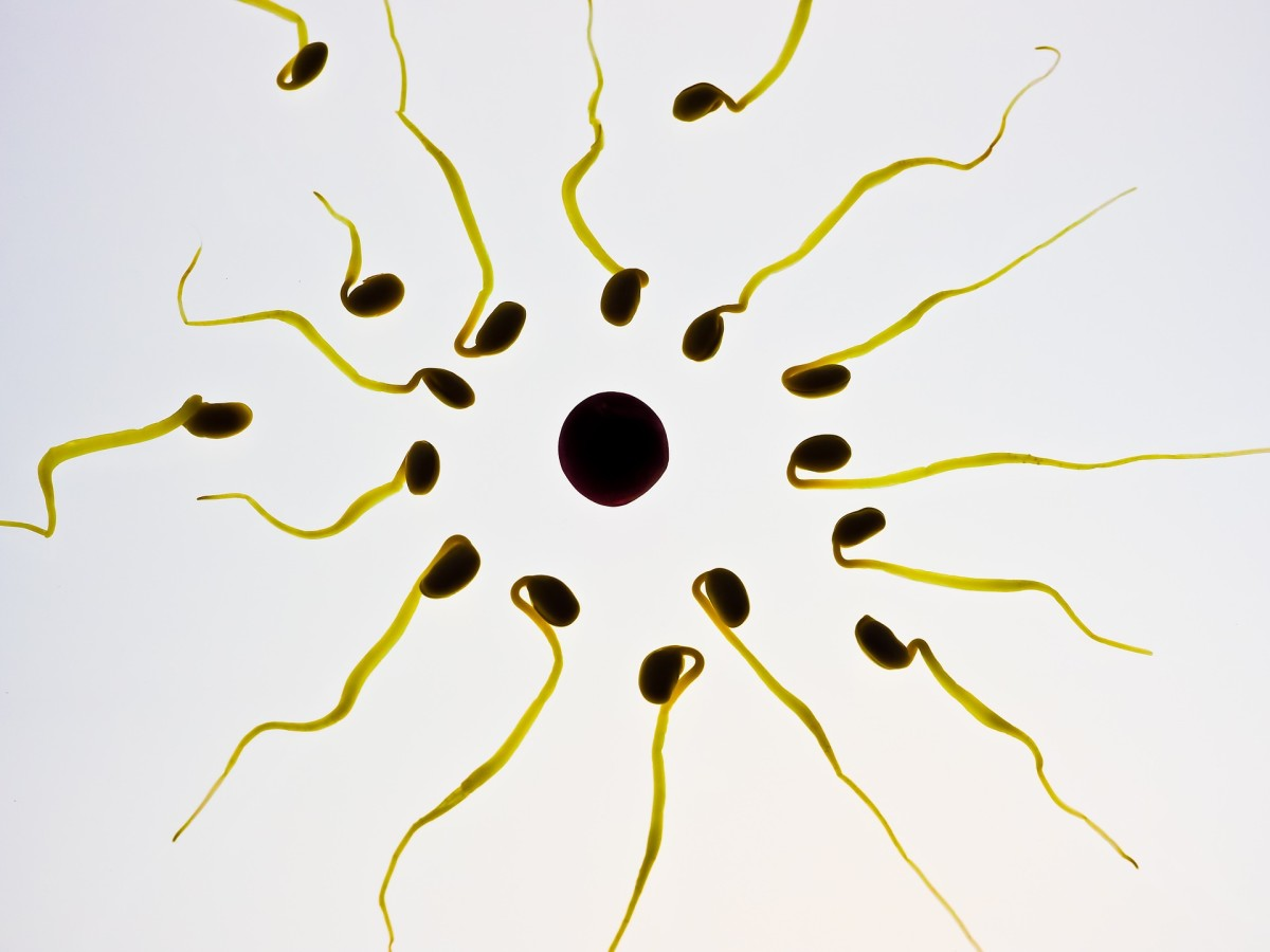 does-using-fertility-lubricants-like-pre-seed-cause-miscarriage