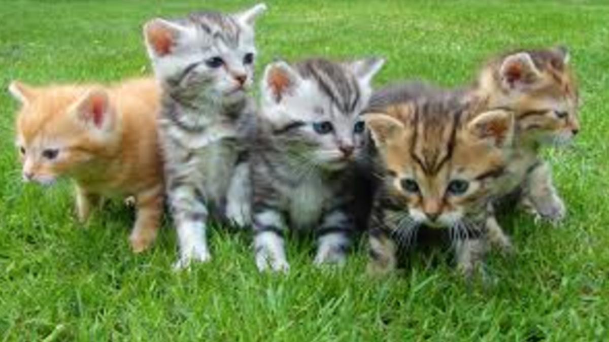 behavior-of-cats-by-zodiac
