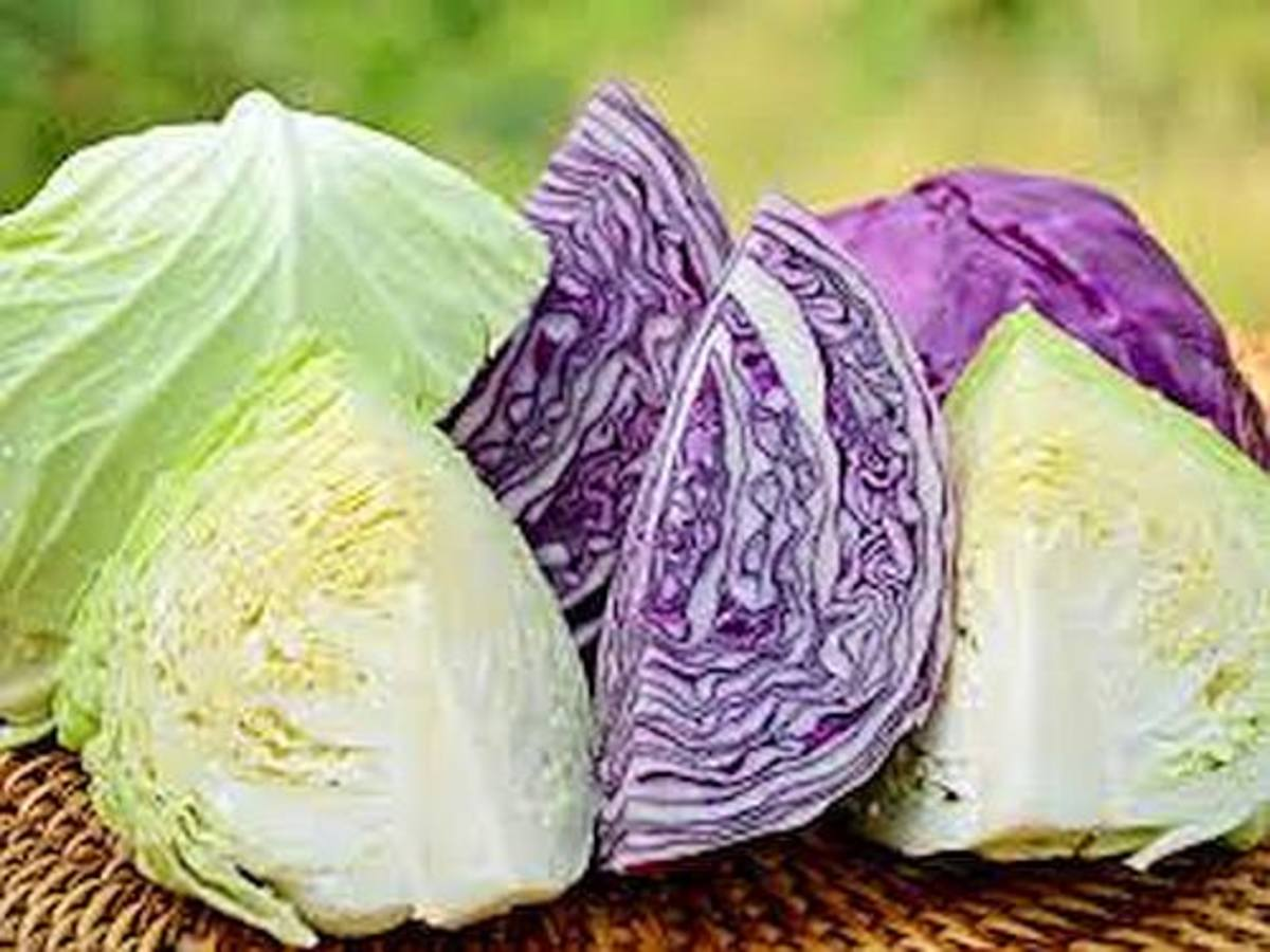 Different types of cabbages