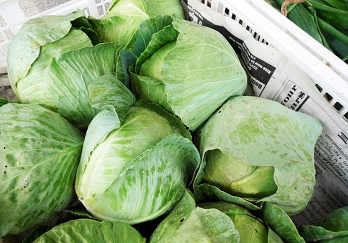 Green cabbage are the most popular ones in the supermarkets.