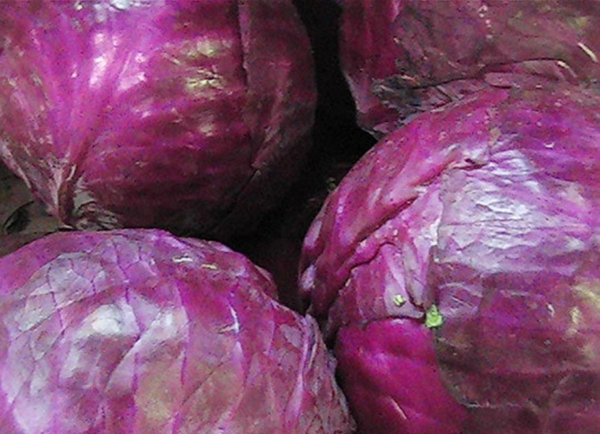 They are called red cabbage, but they look like they are purple.