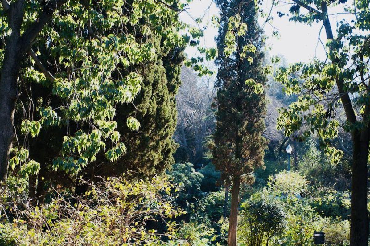 Botanical Garden in Montjuic Barcelona