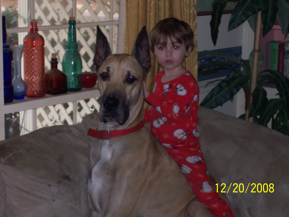 Child Provoked Dog Bite