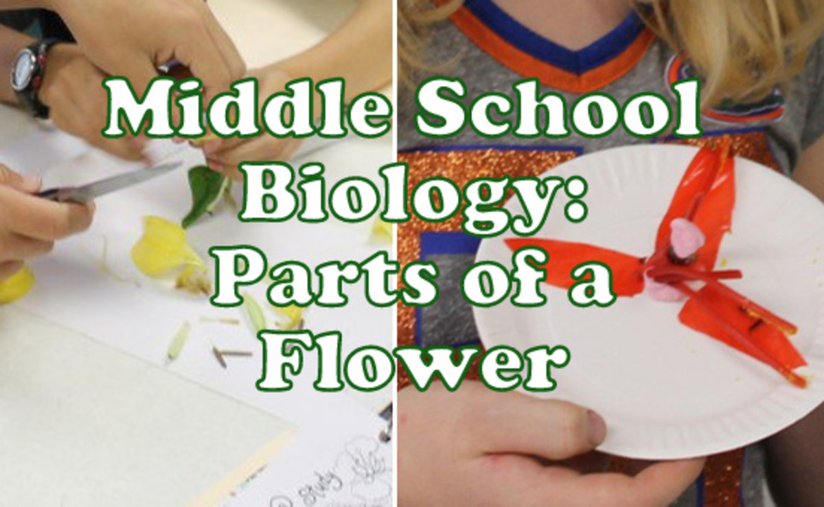 Hands-on Middle School Biology Lesson on Parts of a Flower