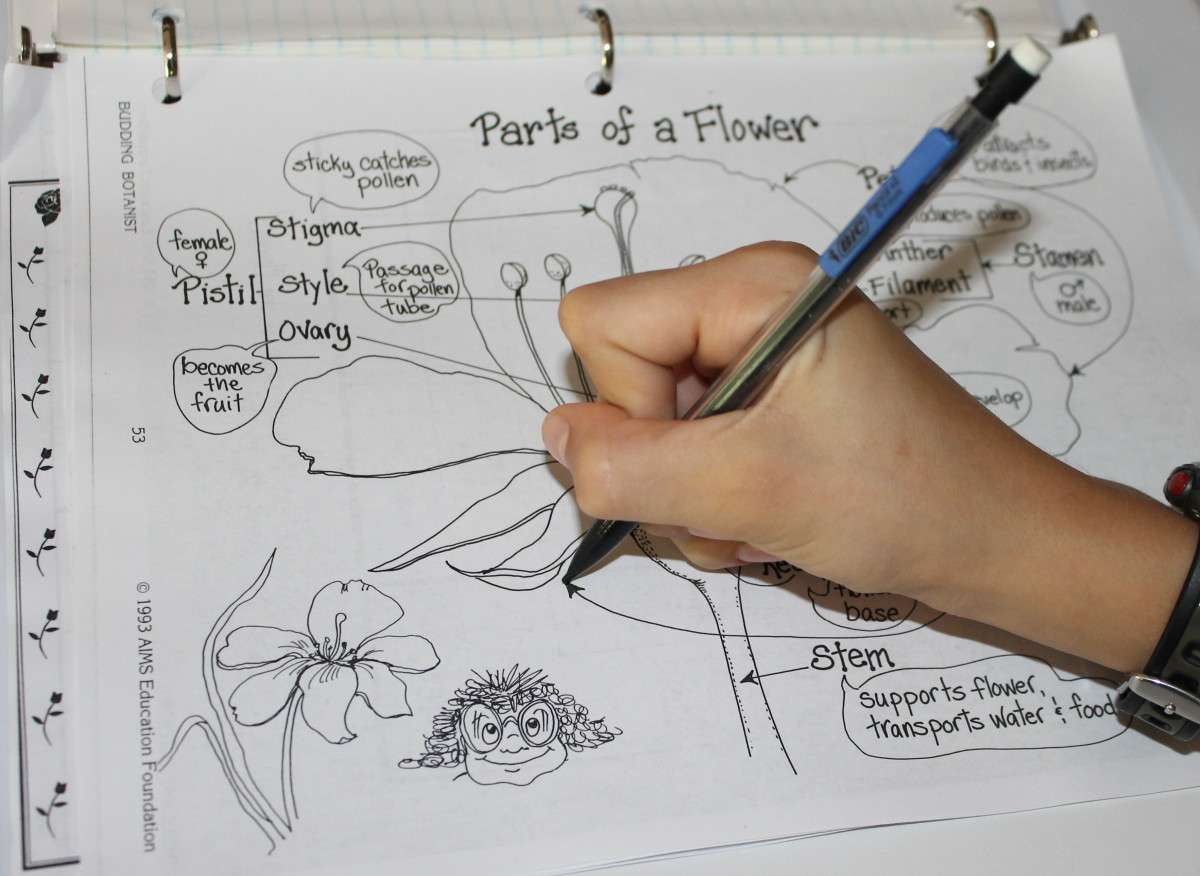 """Flower Parts & Their Functions Worksheet from """"The Budding Botanist."""""""