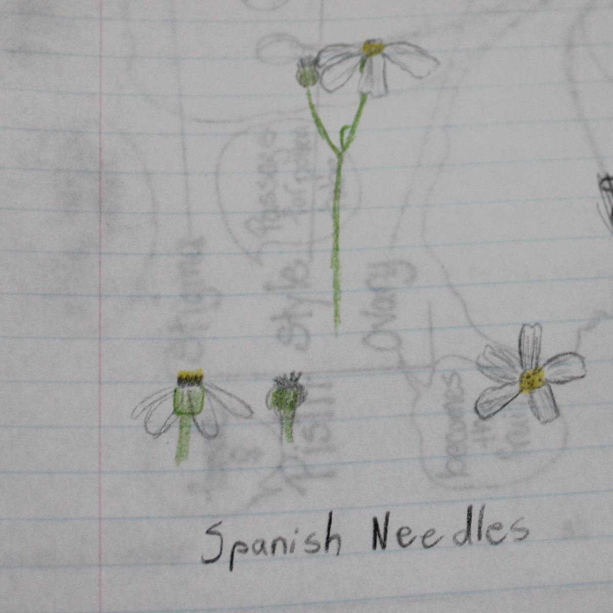 Monday's homework: Draw & identify a flower from outside.