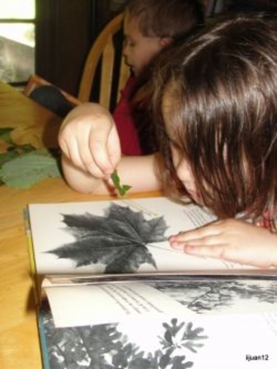 Identifying trees using the leaf shape was one of the many fun activities we did while learning about leaves that is included in my above link Science Morning Basket & Activities: Leaf Shapes.