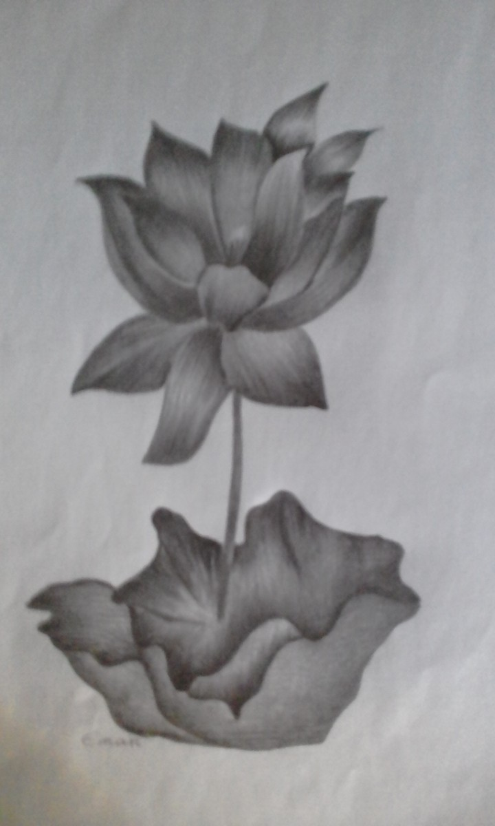 the-beautiful-lotus-plant-nelumbo-nucifera-traditional-uses-nutritive-and-therapeutic-facts